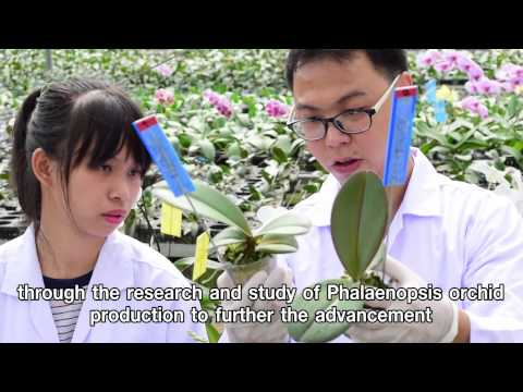Phalaenopsis Orchid Care by Natural Thai Orchid Co.,Ltd.