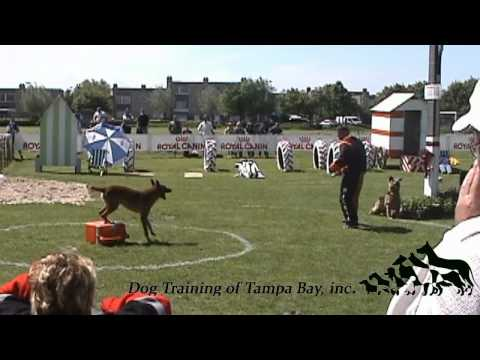 Ring Sport in Tampa Bay