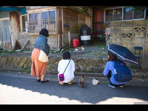 JG 4K 宮城 ネコの楽園 田代島 Miyagi,Tashirojima,Cats Paradise