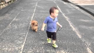 二歳の子供が犬のダックスフンドと散歩しました。小走りがいい感じ(笑...