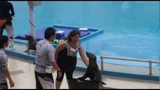 Dolphin & Seals Show @ Sentosa Underwater World Singapore, Dolphin Lagoon