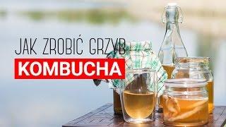 Grzyb kombucha: przepis. Jak zrobić herbaciany grzyb? Czajnikowy.pl