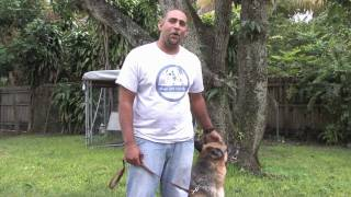 Dog Training & Care : When Can A Dog Get Pregnant For The 1st Time?