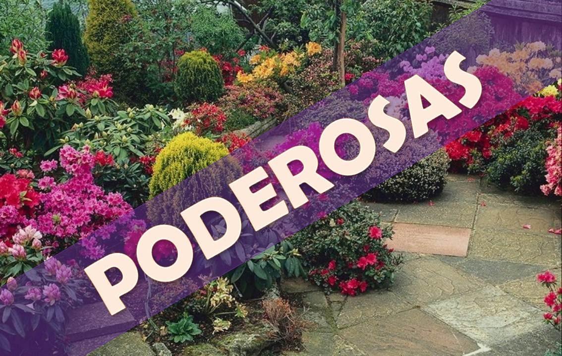 5 plantas ornamentales para aumentar la energ a en el for 5 nombres de plantas ornamentales