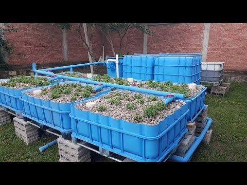 COMPLETE AQUAPONICS SET UP - Start to Finish