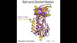 Thioredoxin Reductase