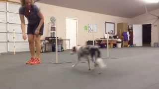 Teach Your Dog The Weave Poles- Part Two