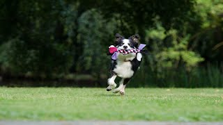 【Cute Cats and Dogs】 A Funny Animals'  Videos Laugh Oneself Sick20201