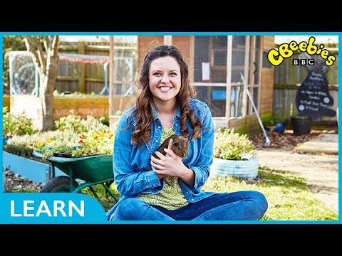 CBeebies | Ferne and Rory's Vet Tales | Choosing a Pet