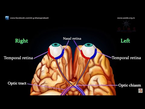 VISUAL PATHWAY ANIMATED ANATOMY VIDEO LECTURE