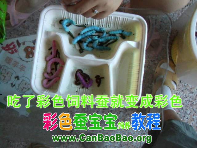 ???????????????????????? Silkworm Chow  colored silkworms
