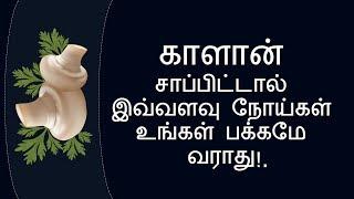 காளான் சாப்பிட்டால்   Mushrooms Benefits in Tamil   Nalamudan Vaazha