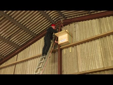How to Erect a Barn Owl Nestbox in a Building