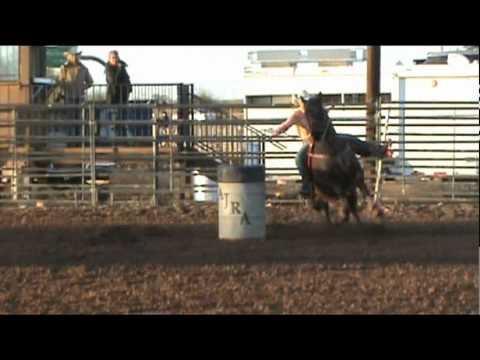 Horse For Sale - Mikey - All Around Rodeo, PRCA Heel Horse, Barrel Horse & More For Sale!