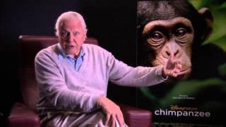 Sir David Attenborough: my passion for wild chimpanzees