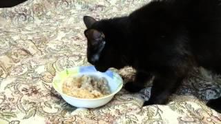 кот и каша