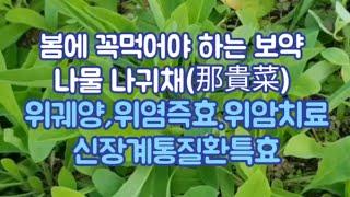 초봄에꼭먹어야할나물,약성좋은봄나물,위궤양,위염에 직방,…