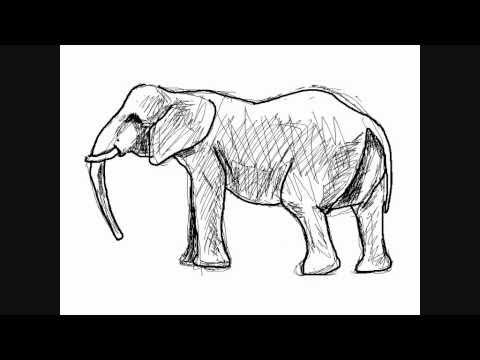 Dessin D éléphant Comment Dessiner Youtube