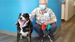 People and pets helped at Options Veterinary Care in Reno - Summer 2021