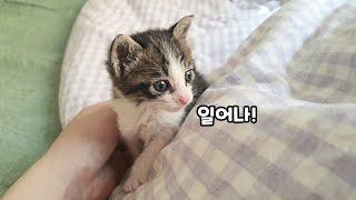 잠자는 집사 깨우는 귀여운 아기고양이