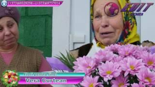 Vera Curtean