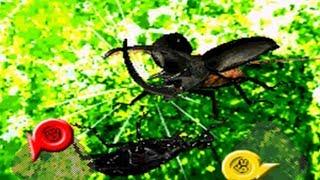 リアルアンパンマンを意識した編集 ニンテンドーDS 甲虫王者ムシキング グレイテストチャンピオンへの道2 ストーリー初見プレイ動画です...