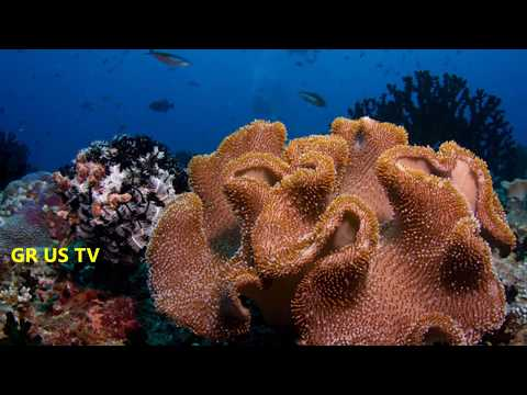 Top 15 Most Beautiful Coral Reefs In The World And Amazing Underwater Life | Part - 1