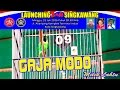 Suara Burung Aksi Lanjutan Cucak Hijau Gajah Modo Di Launching Bnr Singkawang  Mp3 - Mp4 Download