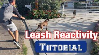 Watch a leash reactivity session//no treats or shocks!