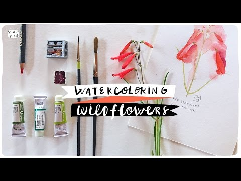 How to Watercolor x Wildflowers, deux!