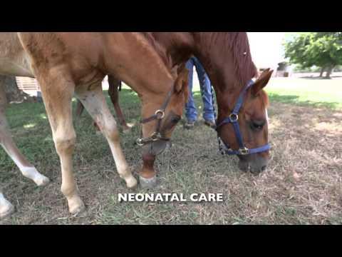 UC Davis Veterinary Hospital Equine Services / Center for Equine Health