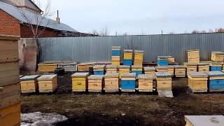 КАК ПОКРАСИТЬ УЛЬЯ   ЦВЕТ ИГРАЕТ РОЛЬ ? Секреты начинающим пчеловодам от А до Я