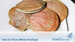 How to Clean Whole Scallops