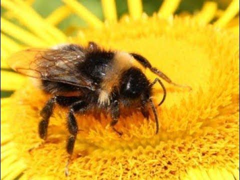 ZÁZRAK ve včelím úlu