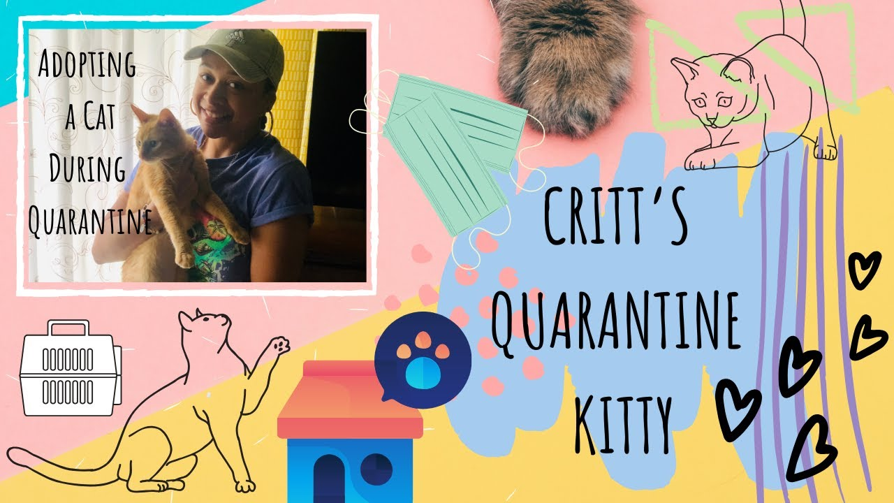 LCritt's Quarantine Cat: Covid Kitty
