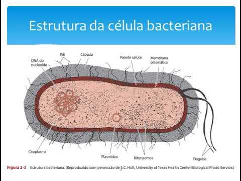 Microbiologia Bactérias