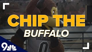 For the 3rd time, CU's Chip the Buffalo is the nation's No. 1 mascot