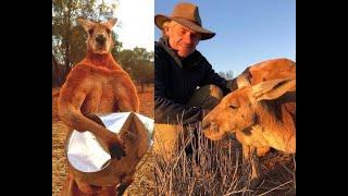 NIE ŻYJE muskularny kangur! Roger miał 12 lat...