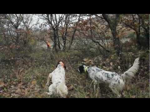 Woodcock Hunting No4. Hunting and its Secrets No25