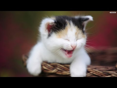 Funny cat videos 2