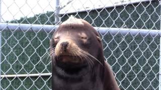 Giving Animals a Second Chance at Life | Marine Mammal Rescue Centre