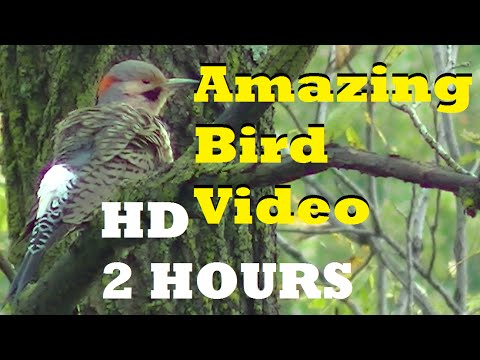 Birds of North America in Motion ! Beautiful, Peaceful 2 Hour HD Video