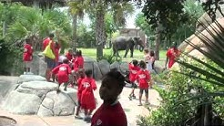 St. Paul Summer Camp at Jacksonville Zoo