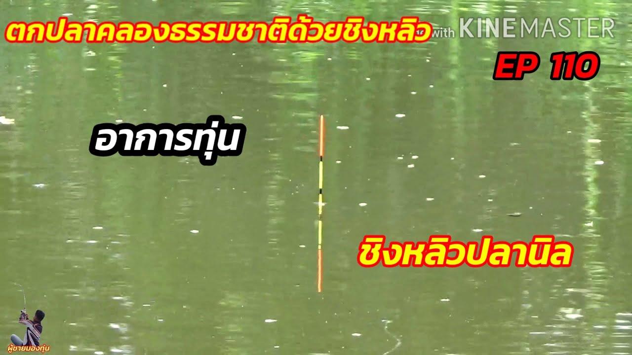 ตกปลาคลองธรรมชาติด้วยชิงหลิว EP 110 ชิงหลิวปลานิล อาการทุ่น