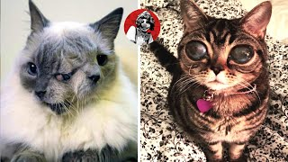 THE 6 REALLY AWESOME AND SHOCKING CATS THAT YOU WON'T BELIEVE EXIST (PART 1) | OSCAR JACK