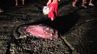 Pêche Miraculeuse à  Hakahau