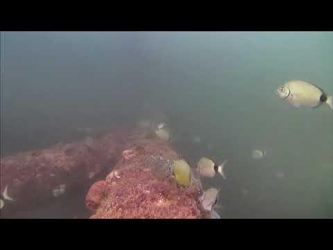 Sharks in the Atlantic Cam 05-18-2017 09:00:08 - 10:00:10