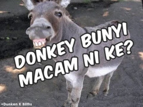 Animal Sound By Aqeef Anaqi - Donkey Paling Win!!!