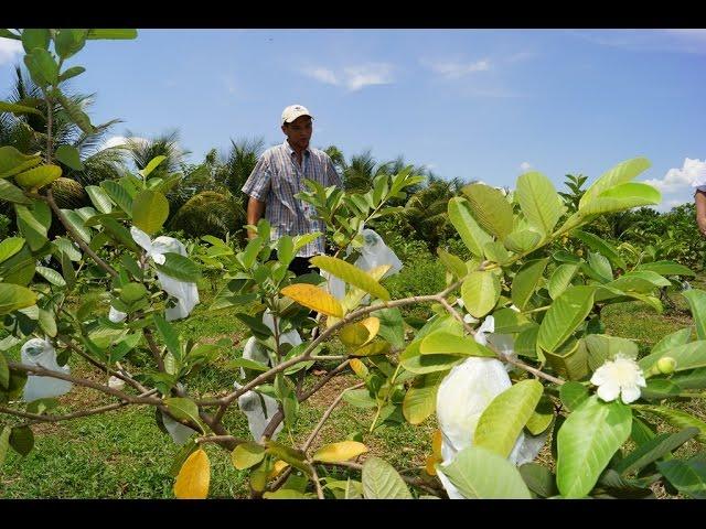 Experiencia sobre Seguridad y Soberanía Alimentaria en la Diócesis de San Vicente.