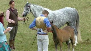 Adran B Eboles o gaseg y dosbarth | Filly foal from class mare
